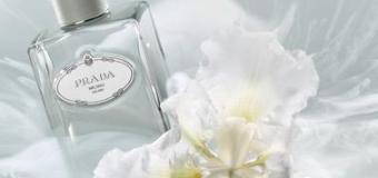Prada Infusion d'Iris Cedre woda perfumowana