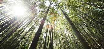 Elizabeth Arden Green Tea Bamboo woda toaletowa